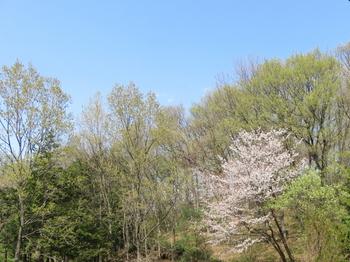 なな山の春_IMG_8618_200402.jpg