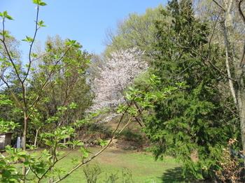 なな山の春_IMG_8620_200402.jpg