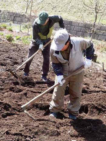 サトイモの畝作り.JPG