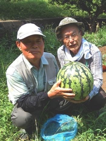スイカの収穫_640.jpg