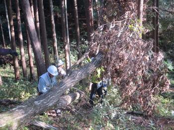 伐倒木の処理.JPG