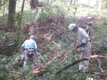伐倒木の処理2.JPG