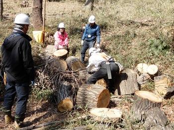 伐倒木の整理.JPG